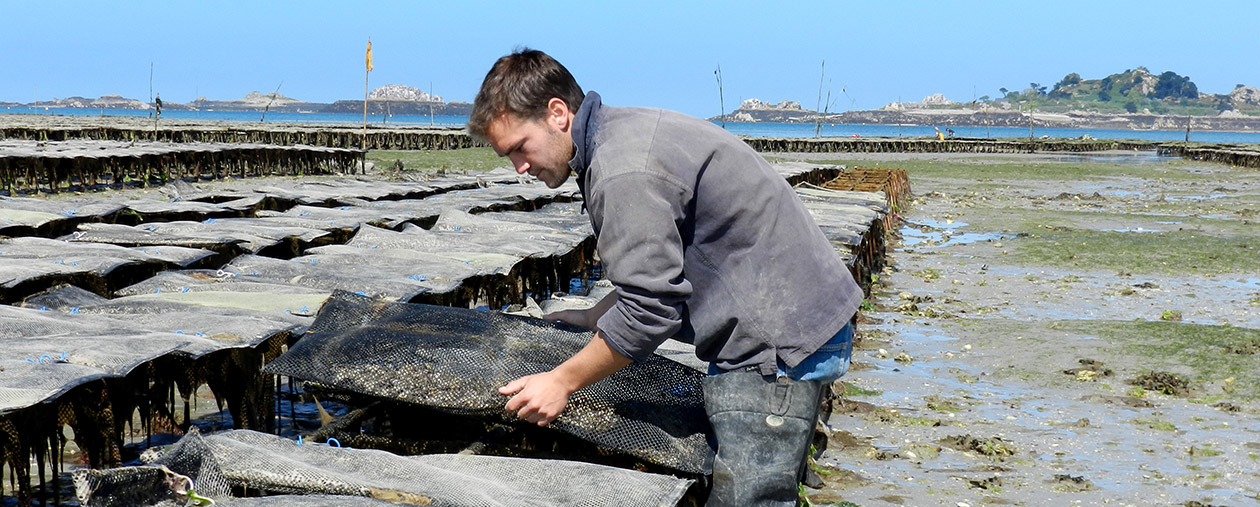 Work in oyster parks | Lambert producer of Marennes Oleron
