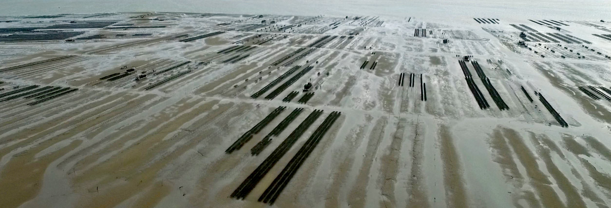 Aerial view of oyster farms, Lambert producer of Marennes Oleron